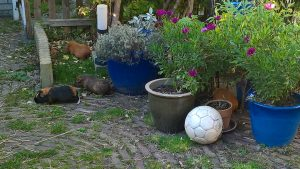 Bailey, Jillz, Sheridan & Hugo in de tuin
